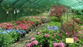 Tuincentrum / Kwekerij Weigelia